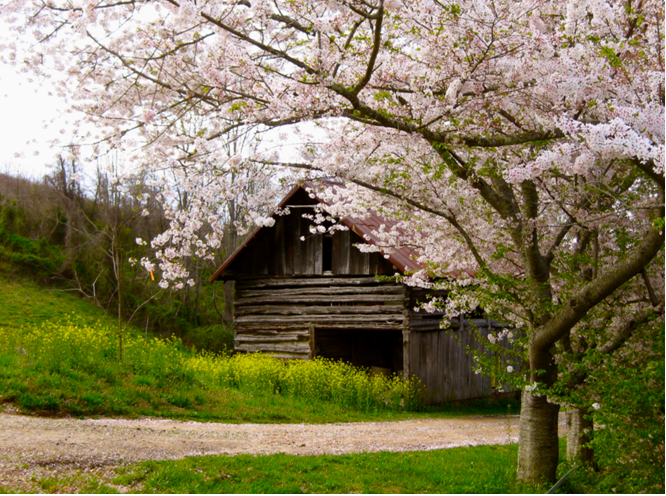 Blethen Barn in Madison County NC